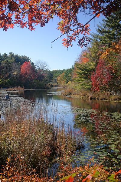 Fall scene at Greak Brook