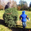 Bringing the tree out