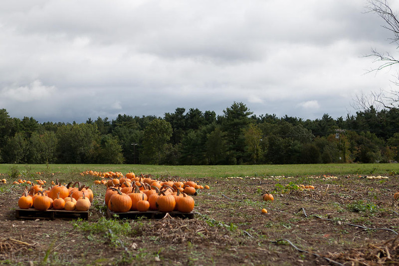 Cloudy with a Chance of Pumpkins