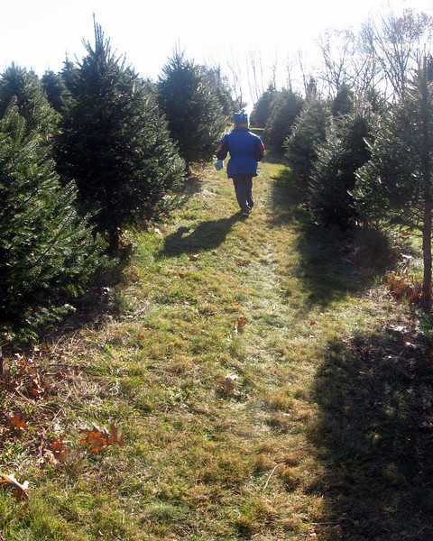 Searching for this year's tree