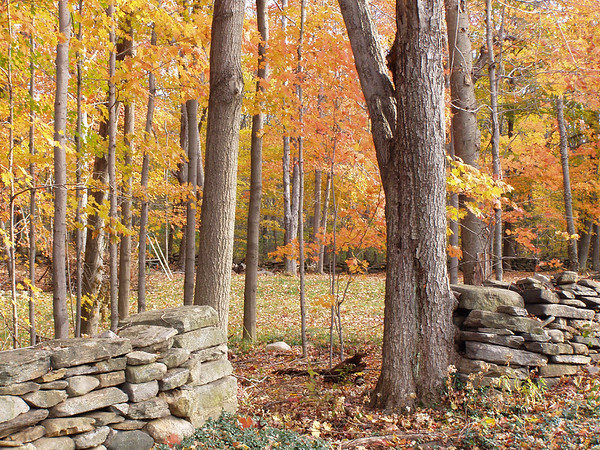 Opening in stone wall is an invitation to enter this colorful autumn scene