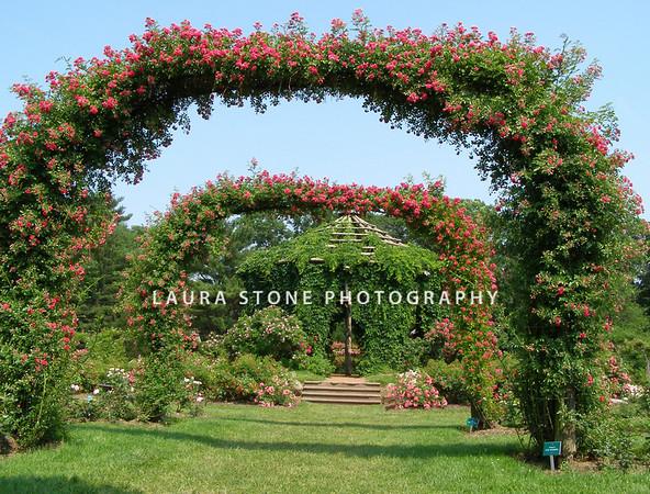 Rose Garden at Elizabeth Park, Hartford, Connecticut