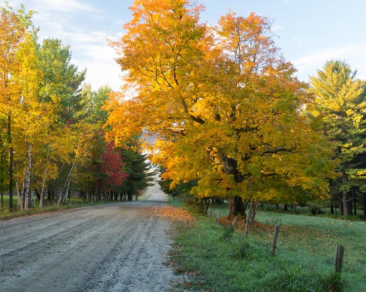 Golden Maple at Sunrise, Stowe, Vermont