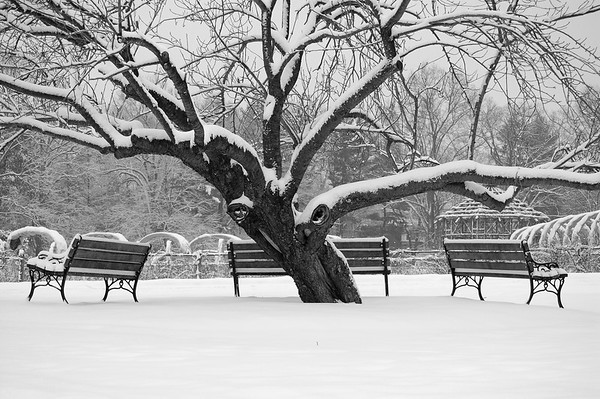 Elizabeth Park in winter. Hartford, Connecticut