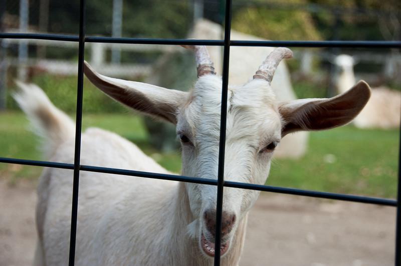 Capron Park Zoo, Attleboro, MA
