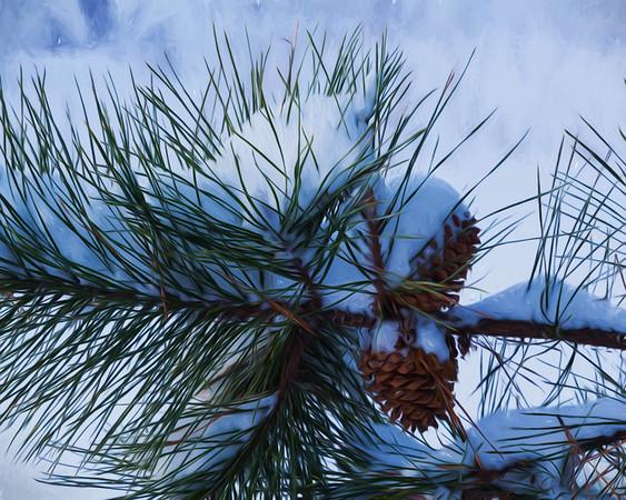 Pine Cones and Fresh Snow, Blackstone, MA