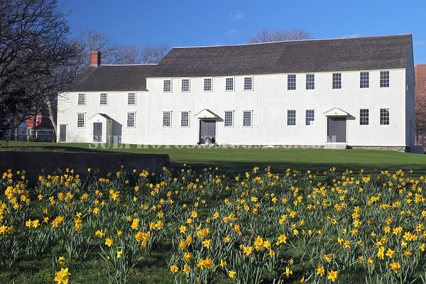Daffodils in front of Great Friends Meeting House (built 1699.) Newport, Rhode Island.