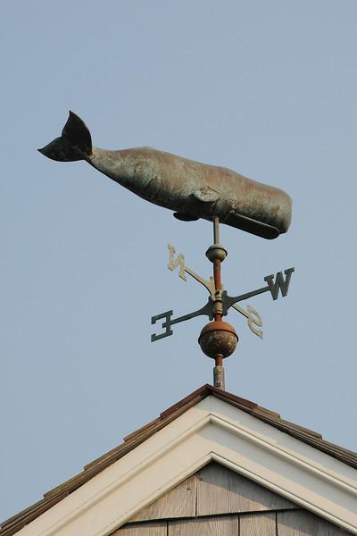 Sperm Whale MA