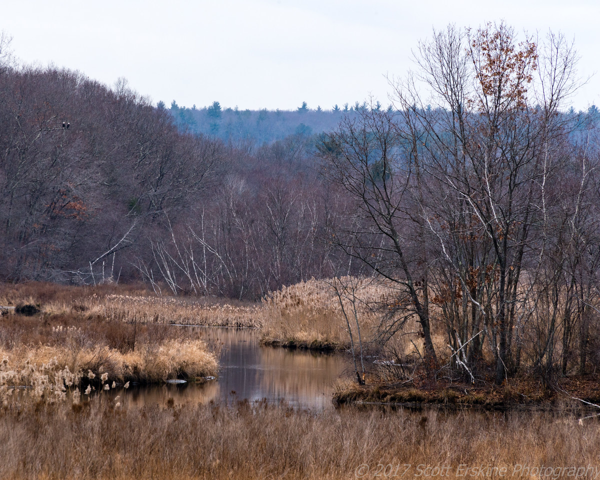 Two Eagles, Rice City Pond, Uxbridge, MA