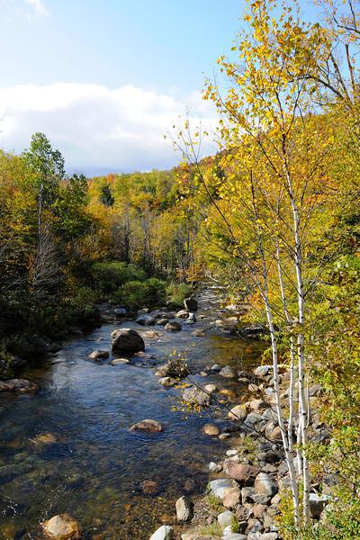 Creek Side Birch NH