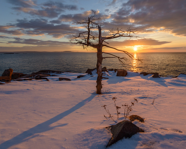 Winter Sunrise Sentinal, Acadia National Park, Maine