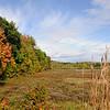 Kennett Field Fall NH