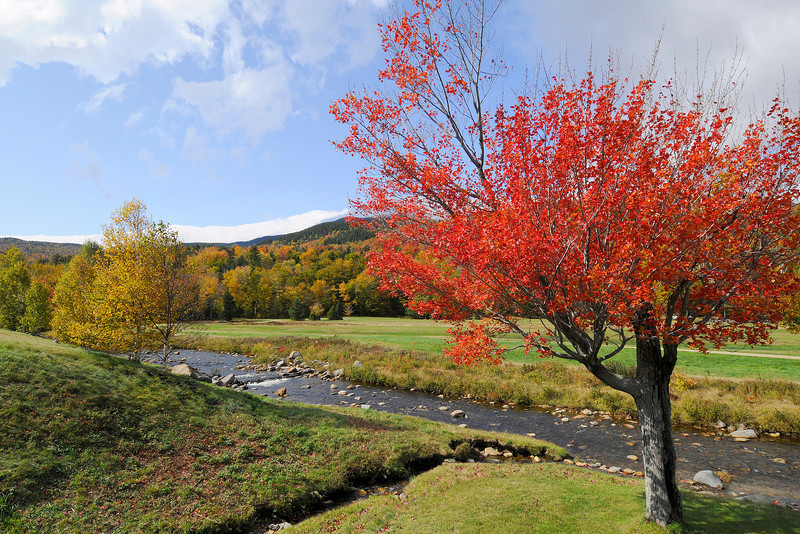 Red Tree NH