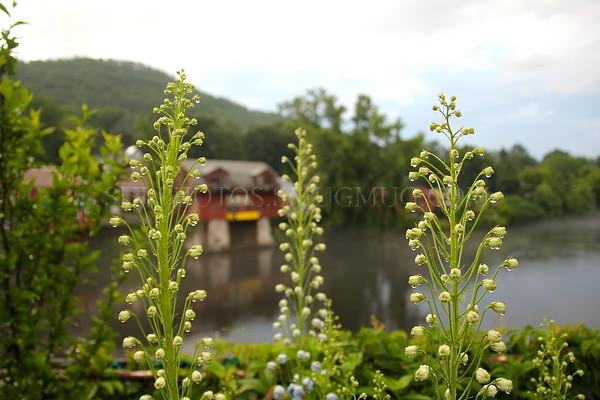 On the Bridge of Flowers