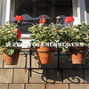 Flowerpots, Ogunquit, Maine