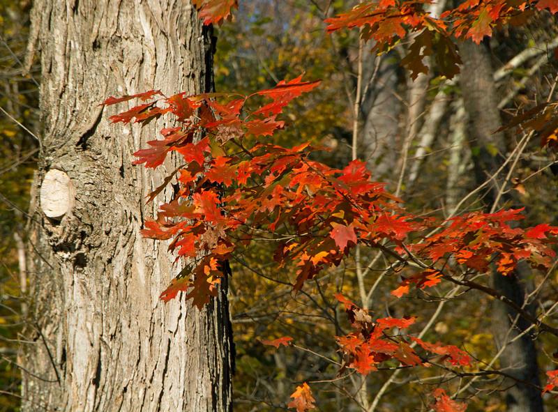 Fall colors near Keene, New Hampshire