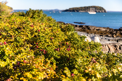 Bar Harbor Foliage
