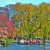 Boston - Public Gardens