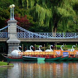 Swan Boats of the Boston Public Gardens