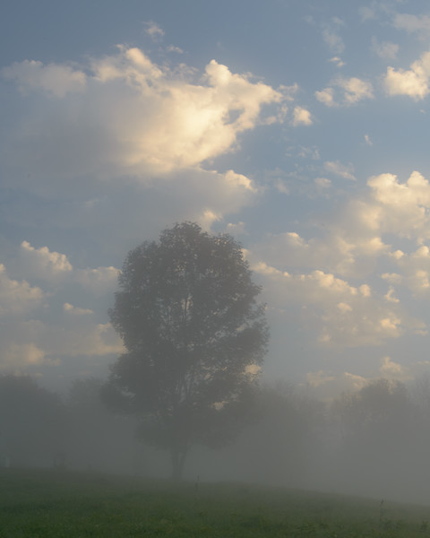 Sunrise Fog, Peacham, Vermont