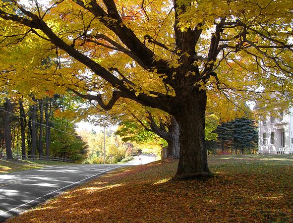 A rural road in the Berkshires, Massachusetts