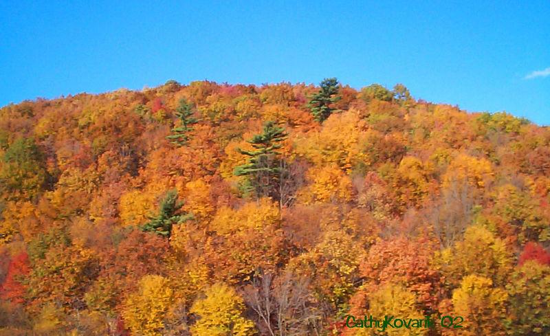 Mountain Foliage, PA