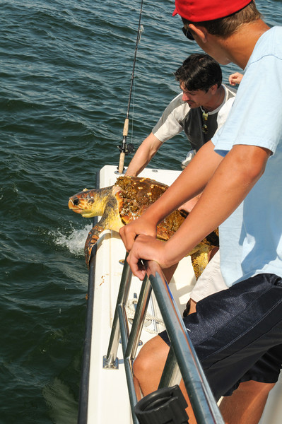 Rescuing Sea Turtle off the Jersey coast - August 2008