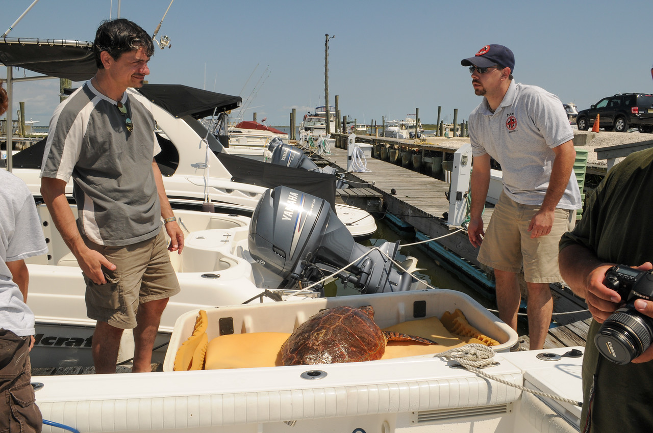 Tony getting ready to hand over Sea Turtle to Marine Mammal Rescue staff member - August 2008