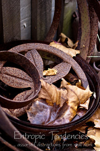 Iron bits and leaves Photographer: Barrie Spence
