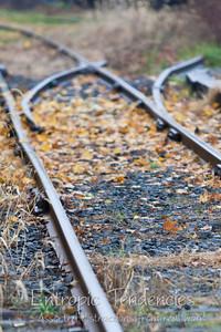Autumn tracks Photographer: Barrie Spence
