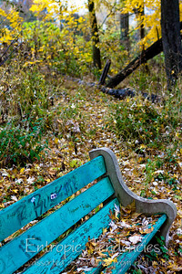 Bench and Autumn colours Photographer: Barrie Spence