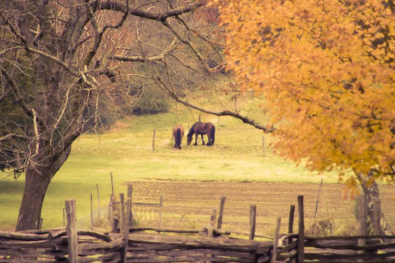 Howell Farm-4927