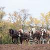 Howell Farm-4979