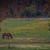 Howell Farm-4816
