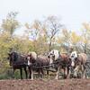 Howell Farm-4980