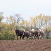 Howell Farm-4977