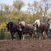 Howell Farm-4981