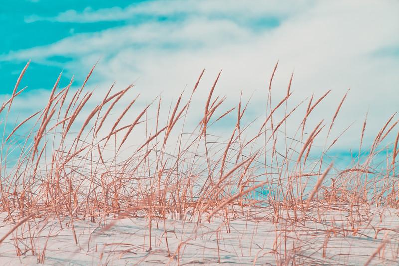 island beach-0992