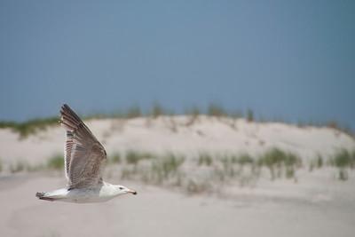 2012  Is Beach St Park-9416