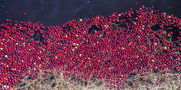 Pine Barrens Cranberries-4848