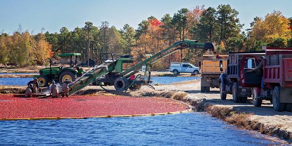 Pine Barrens Cranberries-4966
