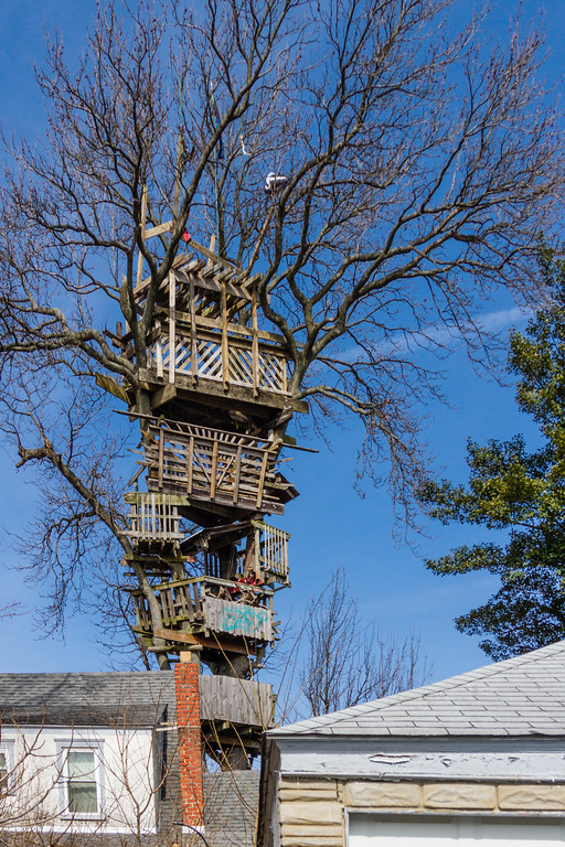 6 Story Treehouse