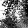 Sayen Garden-1382