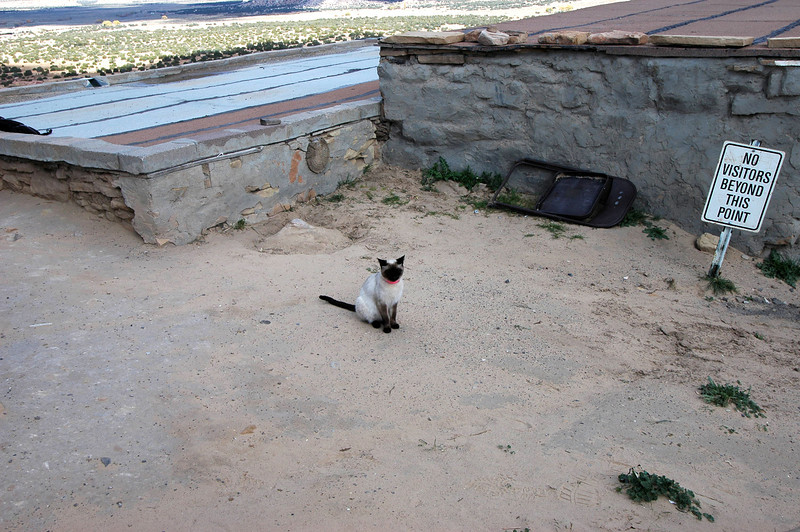Guard cat trained to throw tourists off mesa top.