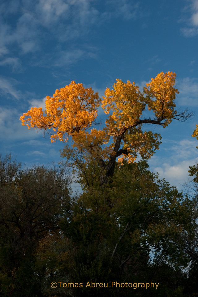 Fall Colors, Chimayo, New Mexico