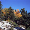 Fall colors atop Sandia Crest.