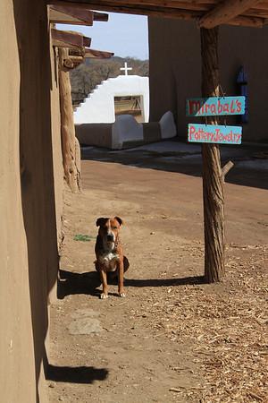Taos four-legged resident