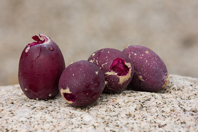 These are ripe prickly pear fruit.  They taste a little like watermelon, if you can eat around all the seeds.