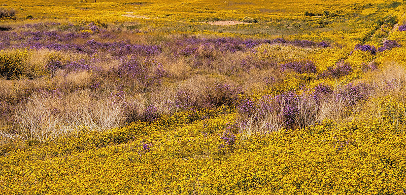 Wild flowers along the road
