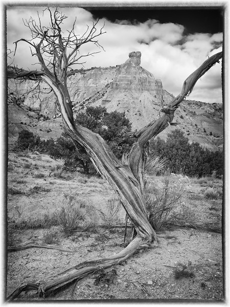 Chimney Rock framed by dead juniper
